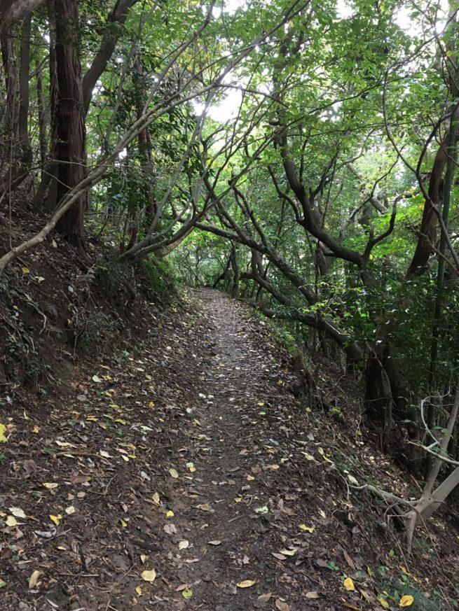 生い茂る広葉樹のトンネル1