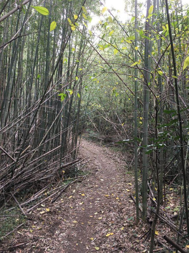 生い茂る広葉樹のトンネル2